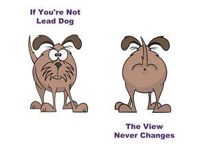 Lead Dog