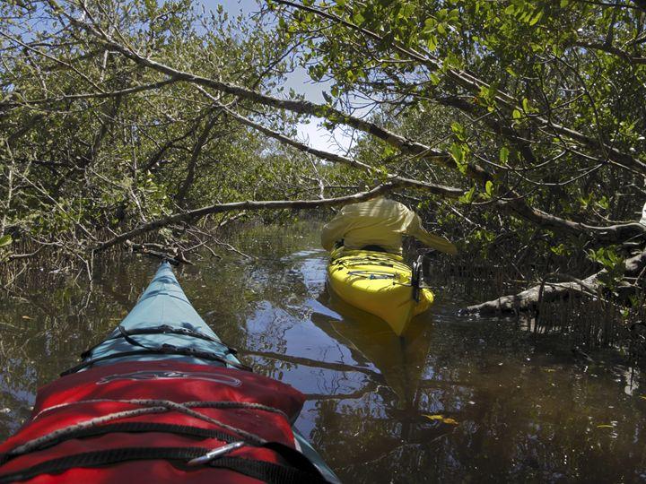 Kayaks Among Mangroves - Sally Weigand Images