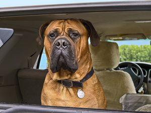 Sad Doggie Face