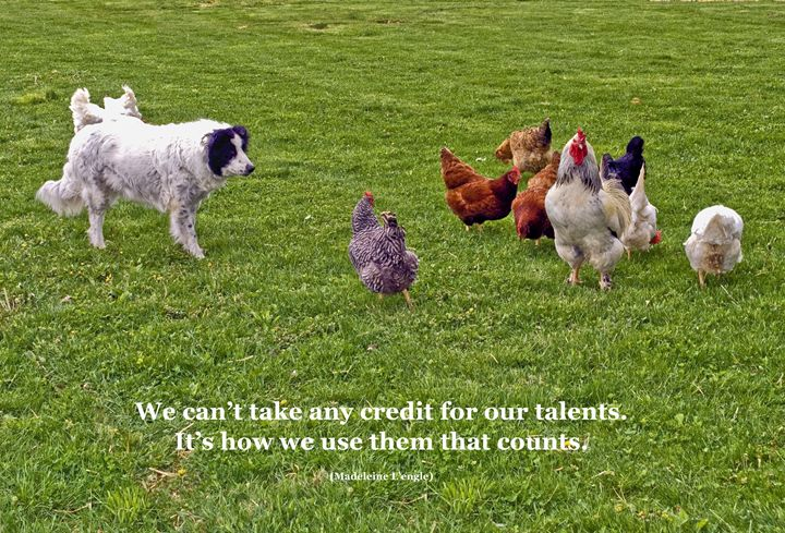 Using Talents - Sally Weigand Images