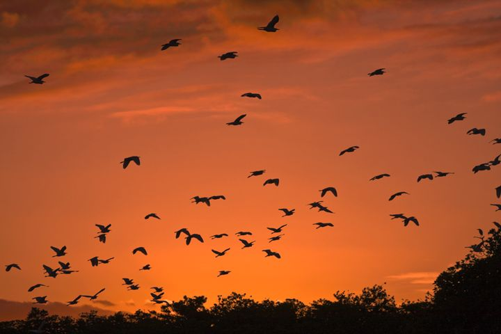 Birds at Sunset - Sally Weigand Images