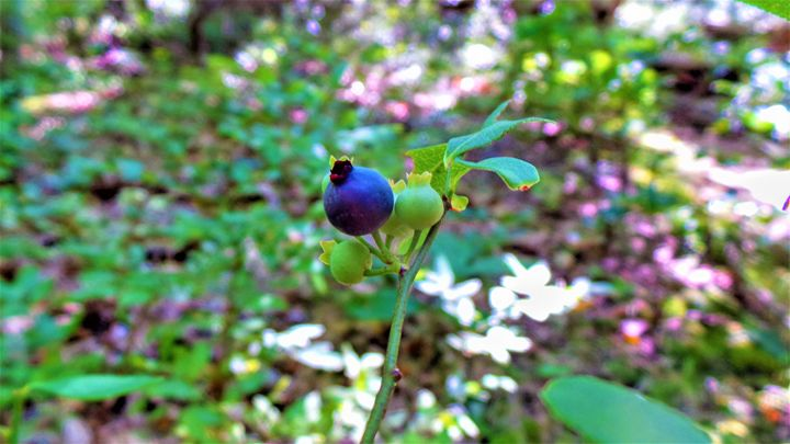 Blueberry Anyone? - Jonathan M. Schwartzman
