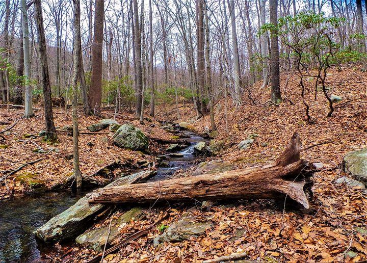 Autumn Woods - Jonathan M. Schwartzman