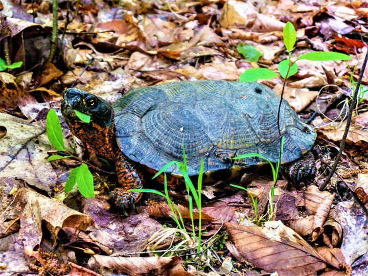 Gregory Turtle - Jonathan M. Schwartzman