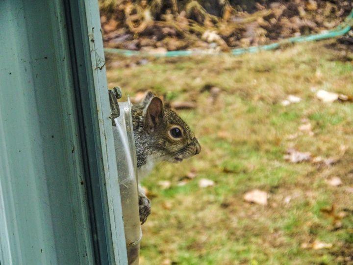 Curious Squirrel - Jonathan M. Schwartzman