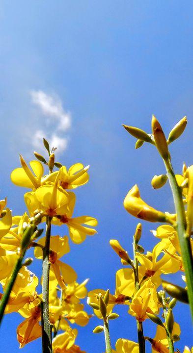 Golden City Orchids - Jonathan M. Schwartzman