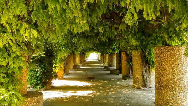 Lane Of Living Arches - Jonathan M. Schwartzman
