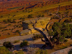 Surreal Desert Tree