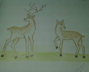 Pair of deers