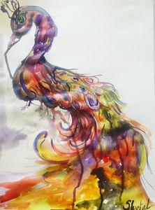 Rainbow peacoak