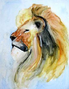 Lion's Pride!!