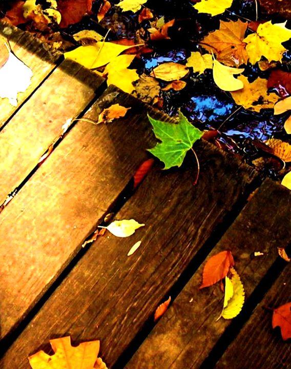 Leaf study 3 - Mark Goodhew Photography