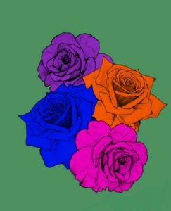Colors of roses