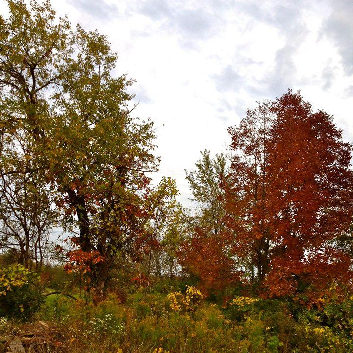 Michigan in Autumn Treescape 2 - Kesha LaRoche