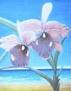 Hawaiian Orchids 1985 Series