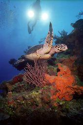 MonteThornton Cayman Island Oceans