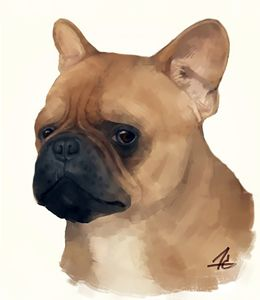 Another French Bulldog - Harlen Chen