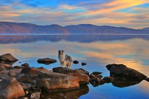A Tahoe Sunset - Eclectic