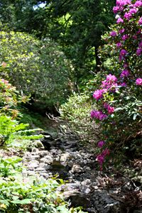 Arthur Arboretum - Rhododendron Path