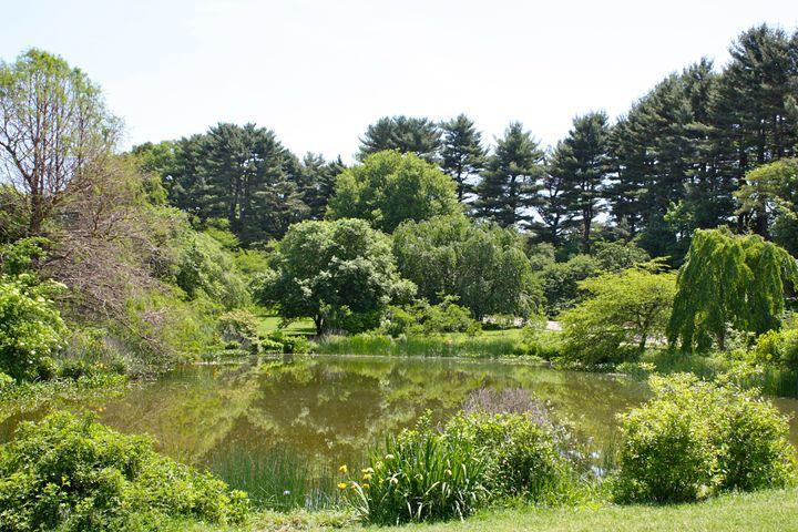 Arthur Arboretum - Dawson Pond - Emily Sobiecki