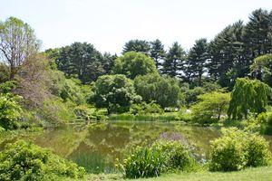 Arthur Arboretum - Dawson Pond
