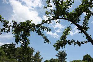Arthur Arboretum - Beautiful Day