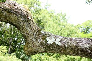 Arthur Arboretum - Explorers Garden
