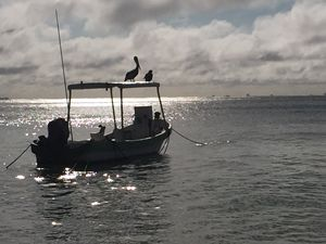 Pelicans on Boat - Sunbird Photography