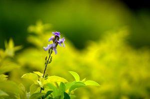 lonely flower in a garden