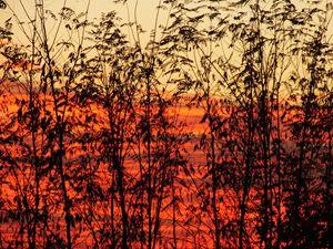 Magic sunset III