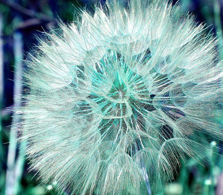 Blue Green Dandelion - Falconz Eye Imagery