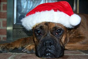 Bella's Christmas - ninasoriginals