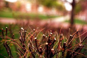 Growing Bush
