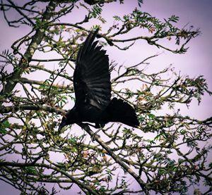 Shiny Black Wings - Art By Marcina