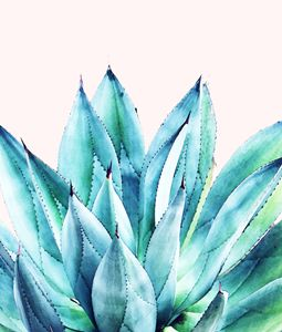 Agave Vibe