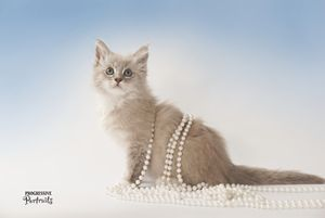 Kitten with Pearls