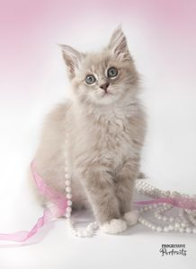 Kitten with Pearls 2