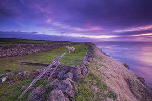 Coastal Horse at Sunrise.