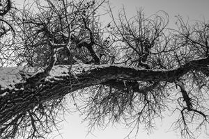 Black and White Winter No.3