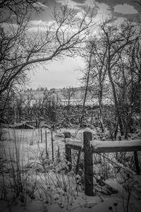 Black and White Winter No.2