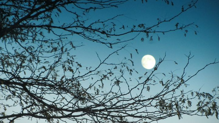 moon in a turquoise sky - tammy  owens