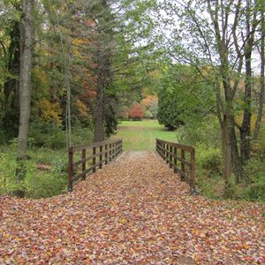 leafy bridge path