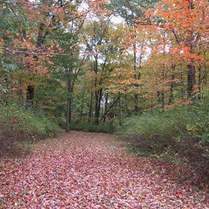 autum pathway