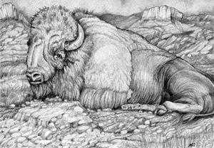 Buffalo Drawing