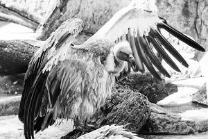 Vulture - PhotoSurgeon