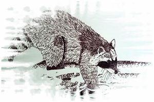 Raccoon dipper - Animart