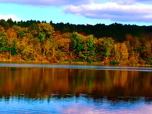 Fall - Multiple Colors