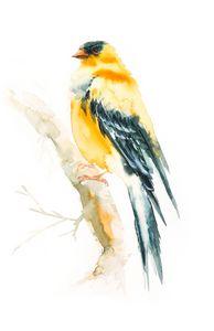 birds arts