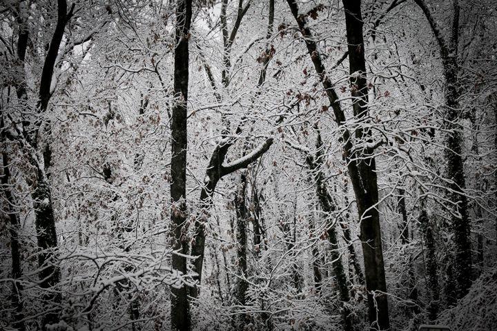 Snow Forrest - Niyon_Studio