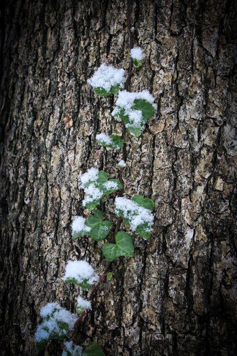 Winter Foley - Niyon_Studio